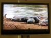 Supporting footage of exhibit subjects shown on the large video monitor