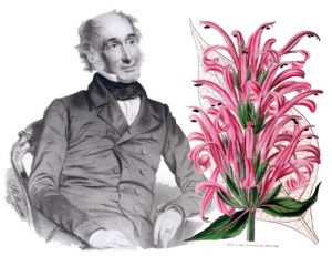Sir William J Hooker and his drawing of Justicia Carnea.