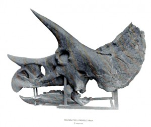 Photograph of Triceratops skull from The Dinosaurs of North America by Othniel C. Marsh. [16th Annual Report of the USGS 1896]