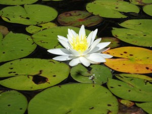 """Second Place – """"Lily"""" by Margot Dent"""