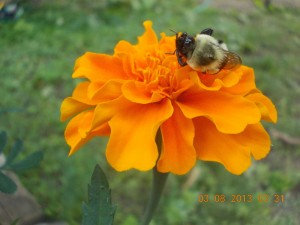 """Third Place – """"Bee's Nap"""" by Isabella Bosson"""