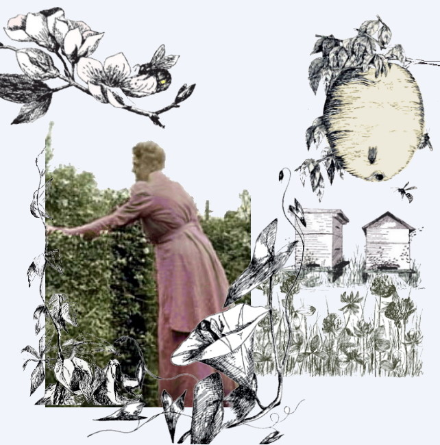 Science writer-illustrator Margaret Warner Morley at her hedge surrounded by pen drawings from some of her best-selling books about bees, wasps, and seeds.